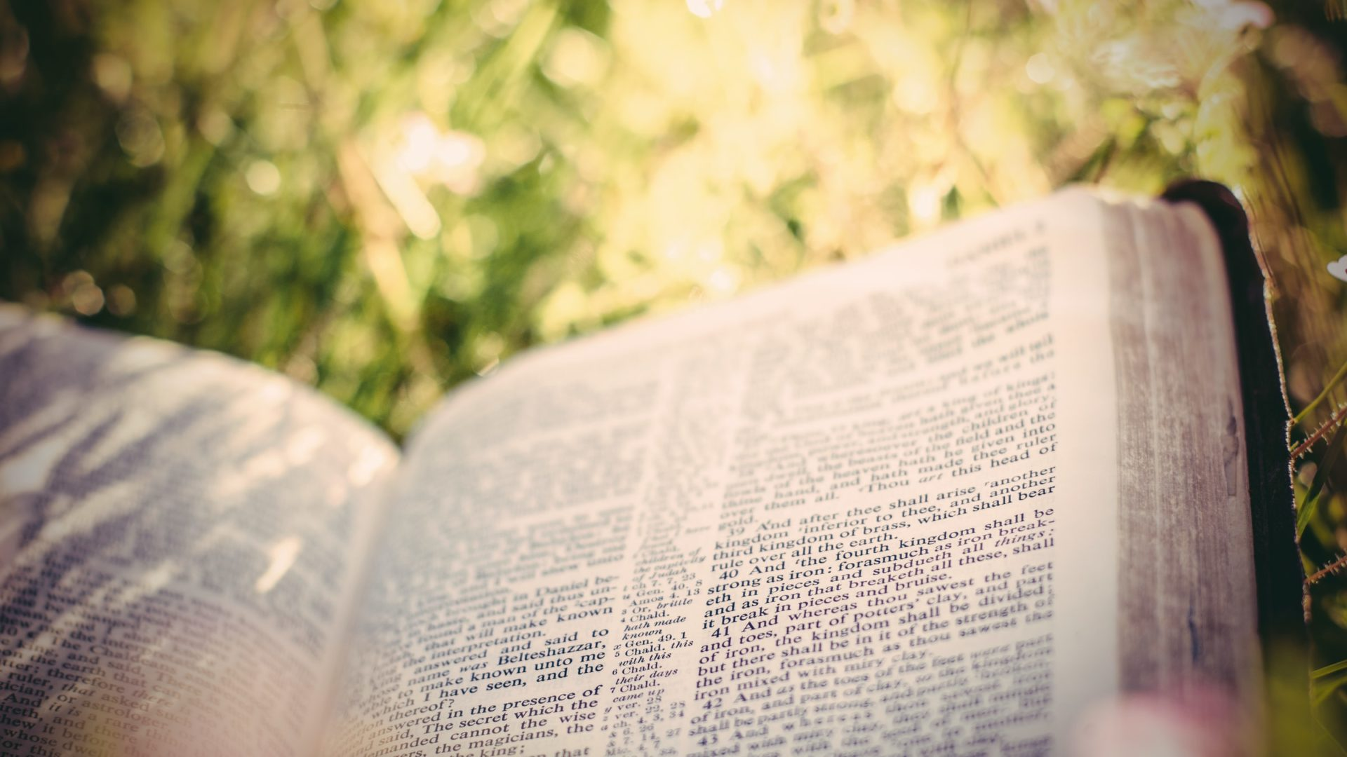 Bible opened in the grass
